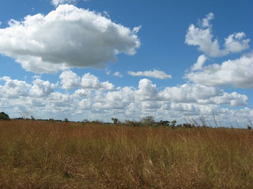 Plains of Mozambique