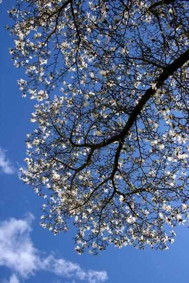 spring-trees-white-1
