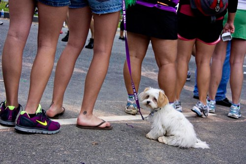 This dog does not want to run a marathon.