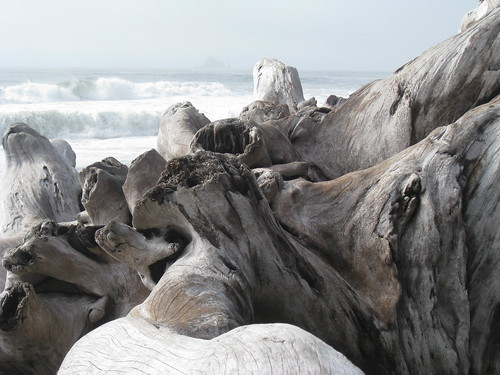 Gorgeous driftwood at Rialto Beach