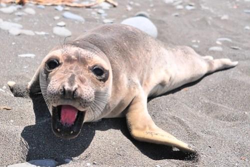 Curious Sea Lion