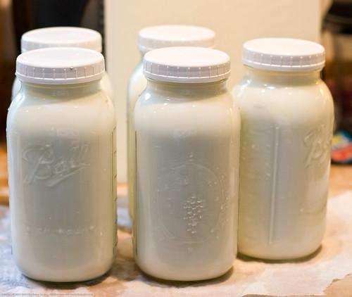 Humble Garden 2009: 2.5 gals/day milk