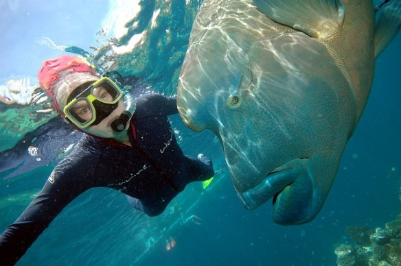 Me with Humphead Wrasse, Great Barrier Reef