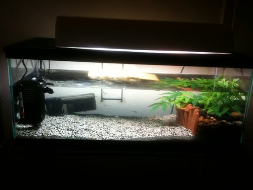 turts and their aquarium full tank shot 20 gallon long
