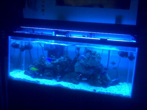 Keeping a 75 Gallon Saltwater Aquarium in an Apartment Sucks | The