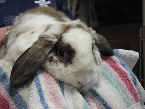 betsy gets a bunny massage