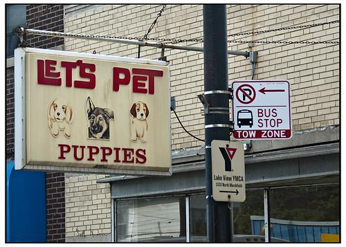 Let's Pet Puppies