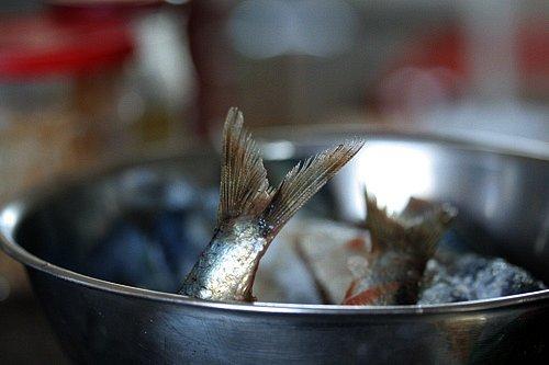 sardine tail
