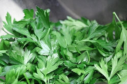 flat leaf parsley