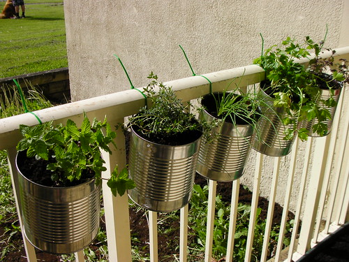 Herbs in coffee cans, hung with zip ties.