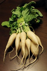 white icicle radishes