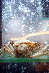 Collage China Treasure snow crab
