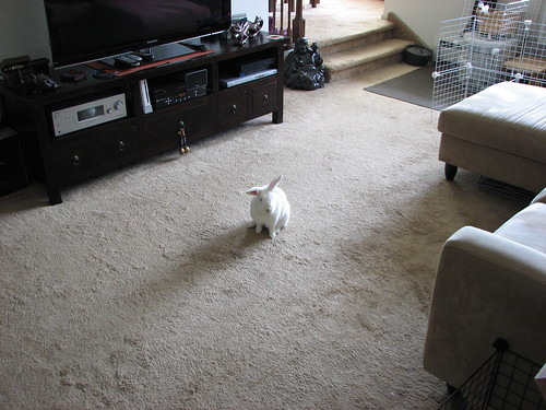 gus in the middle of the living room floor