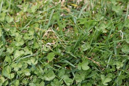 april 11 grass