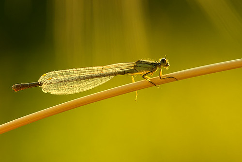 """Dragonfly • <a style=""""font-size:0.8em;"""" href=""""http://www.flickr.com/photos/22289452@N07/9269286419/"""" target=""""_blank"""">View on Flickr</a>"""