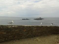 Les mouettes sur l'île aux moines