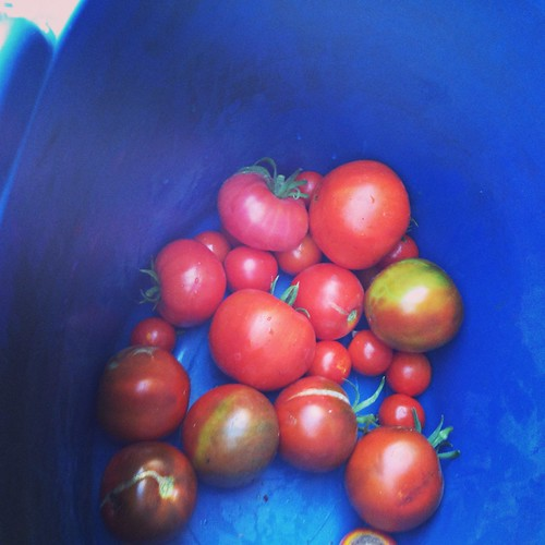 More 'maters!