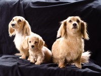 Mascotas: Un complemento de vida