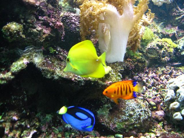 Butterfly Creek aquarium, Auckland | Flickr   Photo Sharing!