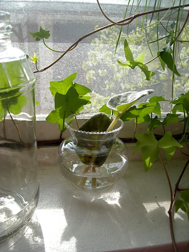 rooting plant cuttings
