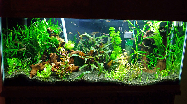 55 Gallon Planted Aquarium   a photo on Flickriver