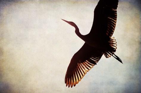 Wings over Dublin