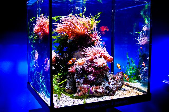 Colourful Fish   Flickr   Photo Sharing!