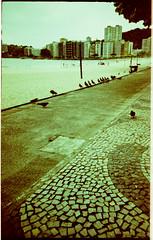 Pombos na Ciclovia / Doves at the Byke Path