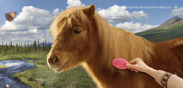 Canal Poney