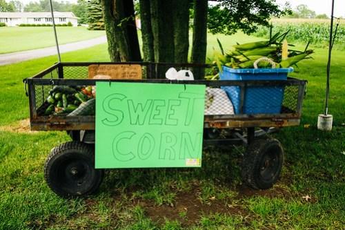 8/12/13 - Sweet Corn