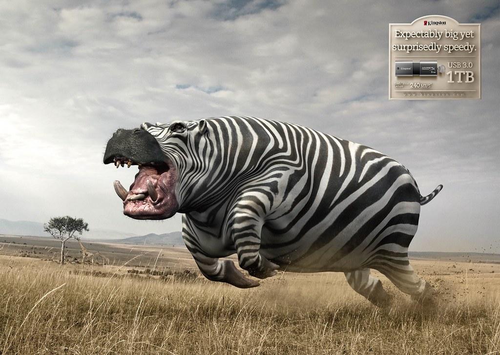 Kingston - Unexpected Zerba Rhino