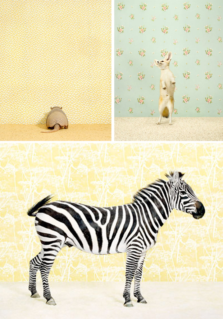 Catherine Ledner {+ Her Animals!}