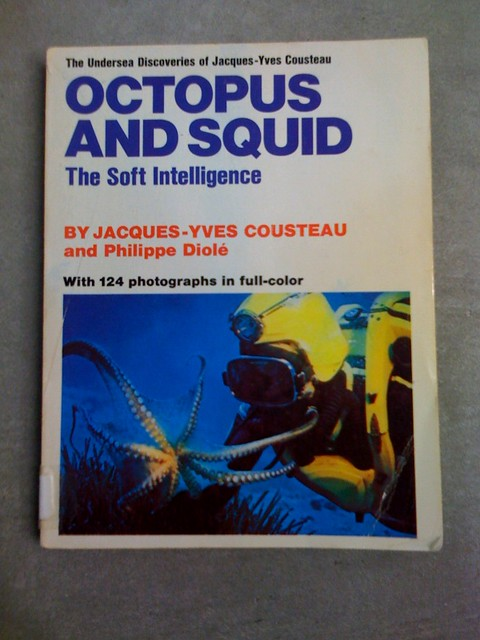 Octopus & Squid