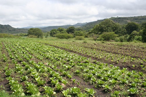 An agricultural project/coop in Nicaragua