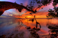 Mangroves at Sunset - Key Largo, Florida