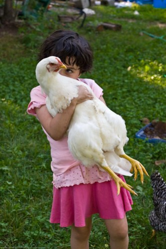 Humble Garden: Inspecting the chicken