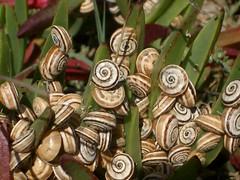 Slow snails