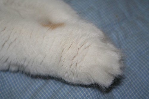 Fudge's feet are giant, with 12 toes