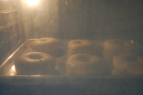 Bagels baking in my crappy oven