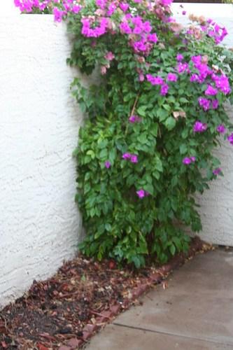 Pretty bush in my little garden