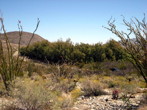 Yaqui Well Nature Trail
