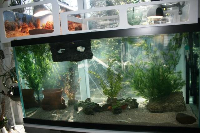 Turtle tank 90 gallon zilla 90 gallon turtle tank for Fish tanks direct