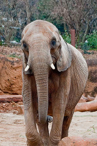jelly the elephant