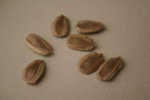 African seeds