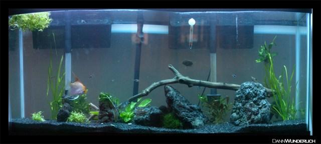 tank. Aquascape ideas?   Aquarium Advice   Aquarium Forum Community