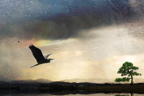~ may you fly free in your heart with confidence and joy ~