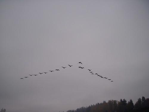 V formation 11.28.08