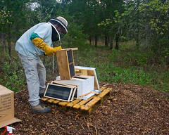 Bee Hive Set-up