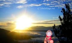 Sago @ Kiltepan Viewpoint