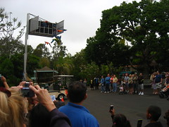 Flights of Fancy Show at the San Diego Zoo